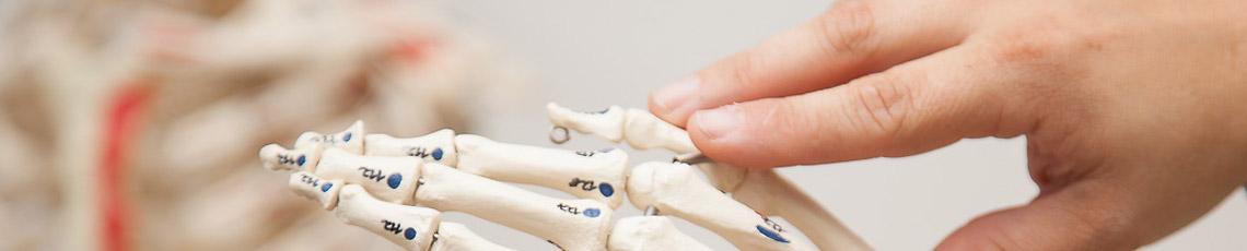 Parietale Osteopathie - IFAO